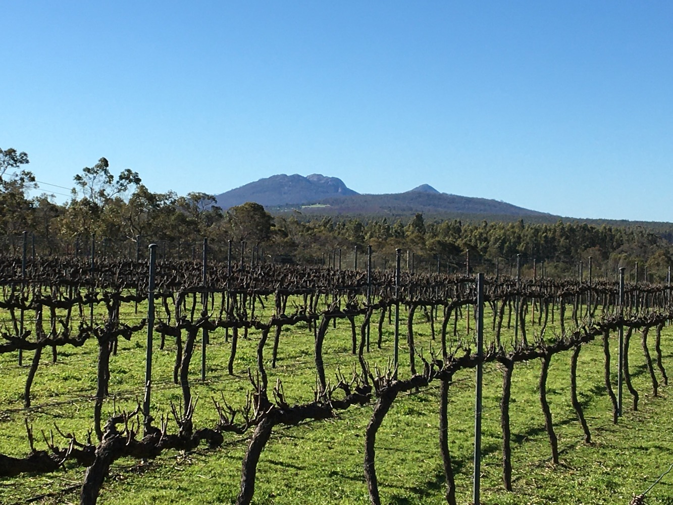A Spotlight on Riesling at our Whispering Hill Vineyard in Mount Barker
