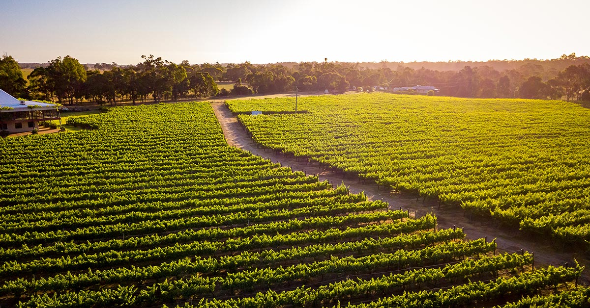 A Spotlight on Malbec at our Stirling Vineyard in Capel Geographe